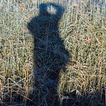 My shadow at Wagon Hill Farm